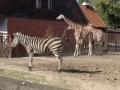 zoo_012